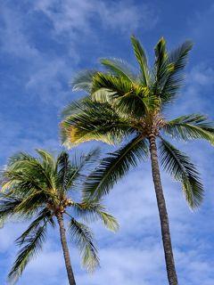 パワーを感じたハワイ島7日間⑤
