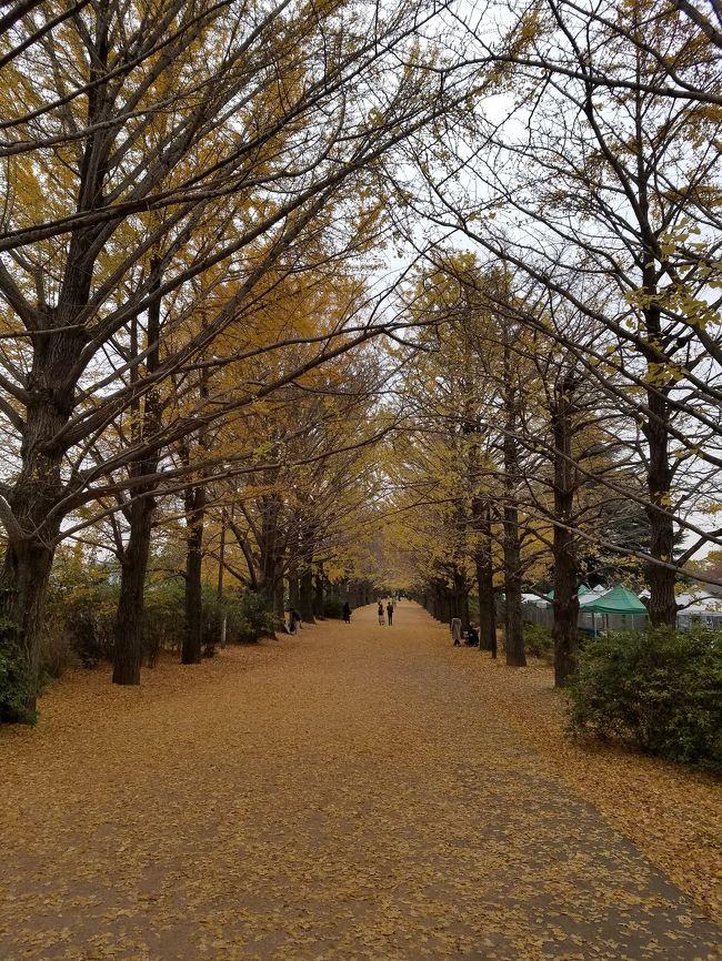 秋の散策、昭和記念公園。