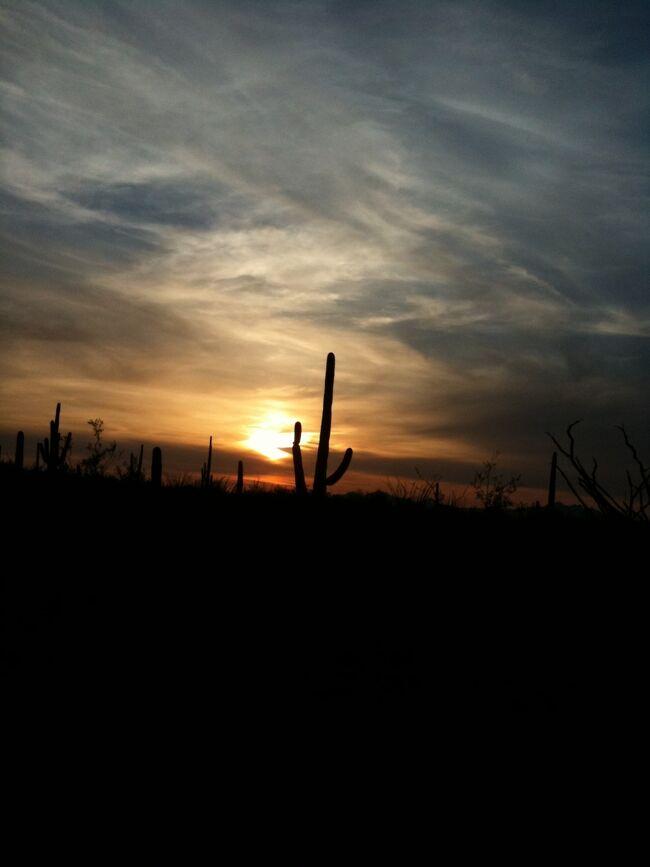 アリゾナ州 ツーソン ー サワロ国立公園