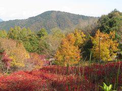 紅葉日和に当たった広島山口レッサーパンダ遠征(3)安佐動物公園と秋吉台サフアリランドで見られた紅葉のある景色やちょっぴりの花など