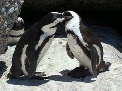 ケープタウン・ナミブ砂漠・ヴィクトリアの滝・チョベ国立公園 ② (ペンギンと一緒に泳げるビーチ)