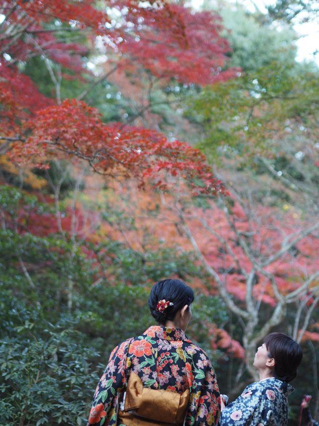 広島中心部で、紅葉の見所と言えば、県外の方にはやはり宮島でしょう。<br />郊外へ行けば他にいくらでも、美しいところがありますが。。。ほぼ昨年と同じ日に、色付き確認をしてきました。