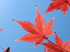 夕やけの葉っぱ、わかる深大寺散策、ちょっぴり高尾山