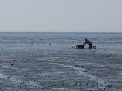 佐賀バルーンフェスタ&グルメ旅(5)最終日はバルーン会場と東よか干潟でゆったり過ごす