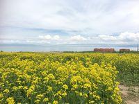 蘭州・西寧標高3,000Mオーバーの旅 (7月に菜の花が咲いている) その3DAY3西寧青海湖