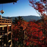 ドラクエウォークのお土産求めて奈良散策