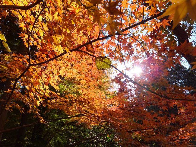 秋になったので紅葉狩りに行ってきました。<br />元吉山清水寺は瀬高駅・筑後船小屋駅から西へ山を少し上ったところにあるお寺です。本坊庭園は雪舟監修ともいわれ空・山・庭の組み合わせが見事でした。紅葉も赤や黄色のもみじがちょうど色づき始めたところで楽しむことができました。<br />清水寺は春の桜・夏の新緑・秋の紅葉を楽しむことができるスポットです。