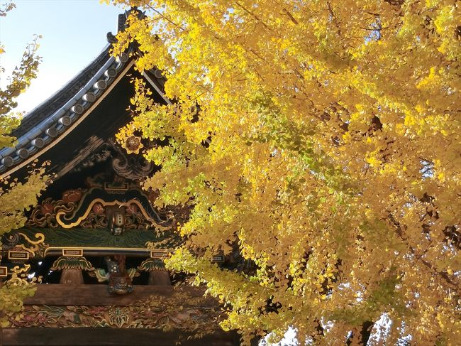 2019年の京都(紅葉狩り)旅行記録です。<br /><br />11/23:常寂光寺・大覚寺・智積院・永観堂<br />11/24:西本願寺・渉成園