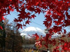 晩秋の山梨への旅 その②富士の裾野に秋が残っていた!