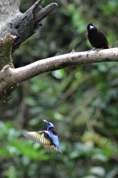 サン・ホセへの道 熱帯雨林の宝物たち、グアピレス 21