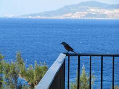ホテルライフを楽しむ沖縄(11)オキナワンブルーの海に抱かれてハレクラニ沖縄。ランチ、プール