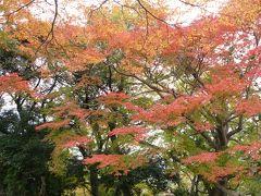 奈良紅葉 2 若草山山頂から二月堂へ