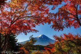 山中湖ロッジ滞在記11月編(2)山中湖、河口湖、富士吉田の今年の紅葉