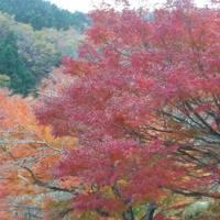 琵琶湖バレー最終日の見学とマリオット泊