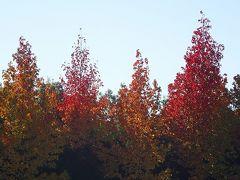 日帰りバスツアー「香嵐峡の紅葉」と「なばなの里のイルミ」(04) 大阪駅から高速路の移動 下巻。