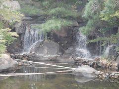 鳥屋野潟公園鐘木地区を見てきました