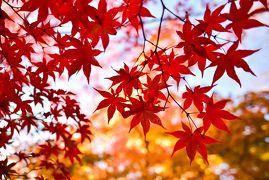 日帰りの京都紅葉旅行 ~嵐山・ライトアップ