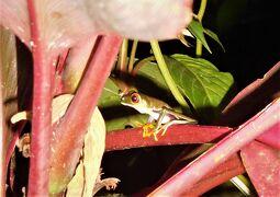 サン・ホセへの道 熱帯雨林の宝物たち、サラピキ 22