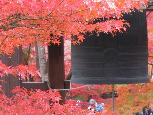 """↑ 智積院  京都東山区  無料 庭園は500円<br /><br />2019.11.27 水曜日 曇り/時々晴れ  最高気温16.7℃ /11.1℃ 最低気温<br />京都市山科区 東山区の寺院と天皇陵墓探索です。<br />----------------------------------------------------------↓ No1<br />毘沙門天・・・・・・・・・・・京都/山科区<br />輪王寺宮墓地・・・・・・・・・京都/山科区   ★再訪問★<br />仁明天皇女御 尊称太皇太后 順子 後山階陵 京都/山科区 ★再訪問★<br />38代天智天皇山科陵・・・・・・京都/山科区   ★再訪問★<br />-----------------------------------------------------------↓ NO2<br />智積院・・・・・・・・・・・・京都/東山区<br />永観堂・・・・・・・・・・・・京都/東山区・・・・1000円<br />南禅寺・・・・・・・・・・・・京都/東山区<br />青蓮院宮上之墓地・・・・・・・京都/東山区 この上下の宮地は非常に難解です<br />青連院宮下之墓地・・・・・・・京都/東山区<br />95代花園天皇 十楽院上陵・・・京都/東山区   ★再訪問★<br />知恩院宮墓地・・・・・・・・・京都/東山区      <br /><br /><br />本日はAM11時頃泉涌寺の駐車場の止めようと参道を車で上がって行ったらやたらと警察官が多かった・・おかしいなと思ったら駐車場の前がバリケードで警察官に停止を求められた。事情を聴くと """"今日は天皇陛下が来られますので止められないとの事"""" ・・・くそ!天皇が私に初めて危害を与えた。((+_+))仕方ないので智積院の方に車を止めてそこらから自転車で探索です。<br /><br />帰りに東大路通通ったら警察官が先日の東京でのオープンカーパレード程では無いですが30メート理間隔で並び見送りの人が歩道に多かったです。時間が分かれば私も天皇を見たかったです。丁度PM17時頃は泉涌寺に居たらしいですから時間的には1時間待ては見られたかも知れません。時間の情報は分かりませんから。<br /><br />※カメラはキャノン パワーショットSX-20 半バカチョンカメラです<br /><br />本日の経費は<br />山科聖天賽銭・・・・・100円<br />永観堂・・・・・・・・1000円<br />おしるこジュース・・・・230円<br />ガソリン代・・・・・・2000円<br />高速代金・・・・・・・2500円<br />---------------------------------------<br />           5830円<br /><br /><br /><br /><br />"""