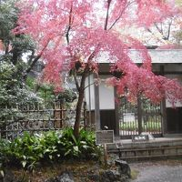三島市の楽寿館見学と三島大社の七五三に出会いました