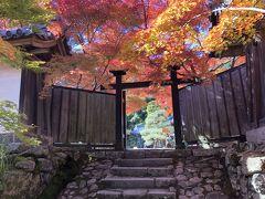 2019年11月 京都嵐山の紅葉 厭離庵・二尊院