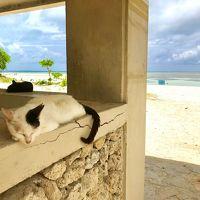 楽しかった竹富島 〜  《 後半 》 絶景コンドイビーチと石垣島グルメ