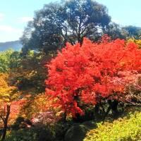 シニア夫婦温泉旅 嬉野温泉&佐賀の紅葉を訪ねて 後半