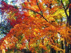 これ以上はあるまい!という晴天の下、紅葉を求めて高尾~陣馬縦走。待っていたのは大どんでん返し。