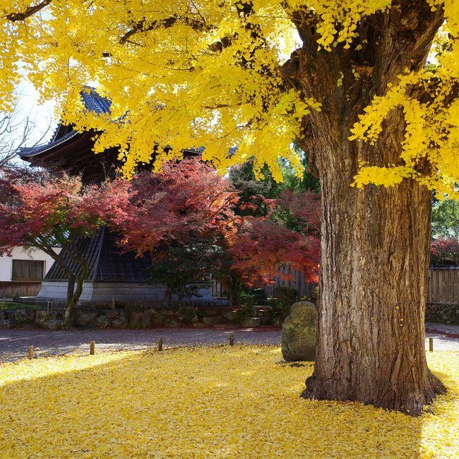 2019年11月29日、遅まきながらこの冬一番の寒気来襲となったこの日、天気には恵まれそうな予報だったので、思い立って名古屋市名東区の自宅からほど近い多治見、定光寺方面へ紅葉狩りに出かけてきました。<br />まず最初は多治見市の虎渓山永保寺、初めてお邪魔しましたが大イチョウの木が実に見事でした。<br />近くの名店「信濃屋」でランチを頂き、半世紀以上生き永らえている中で生まれて初めてアウトレットなるものにも立ち寄ってみました。<br />その後、中央線定光寺駅近郊で期間限定で公開されている愛岐トンネル群を散策し、最後に定光寺を見学すると言うまさに紅葉三昧。<br />腕もないうえ写真はコンデジGR3での撮影なのでiPhoneより多少はマシと言うレベルですが、素晴らしい光景はしっかりと目に焼き付けておきました。