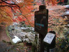 京都トレイル(西山コース)清滝~苔寺谷 紅葉の中を歩きました