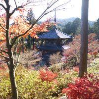 滋賀湖南 常楽寺 艶やかなドウダンツツジの色香に迷う