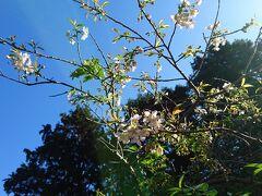 【ちょっとお出かけ】もみじ寺で重要文化財と紅葉と桜。