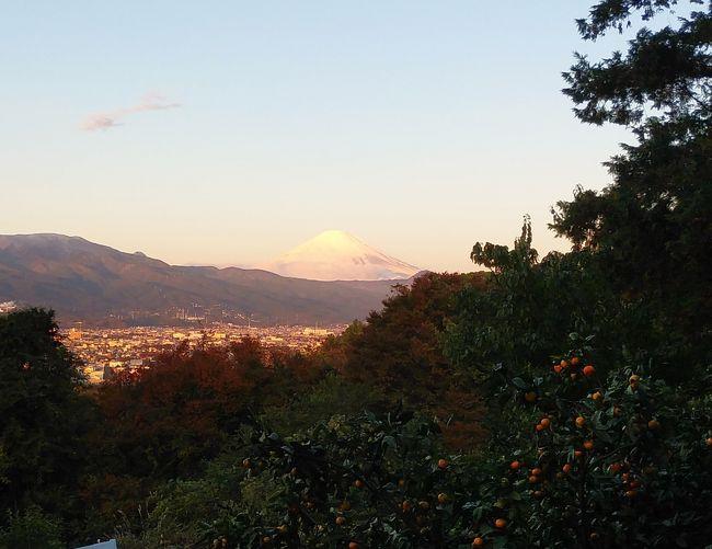 この数日小田原市は極寒の毎日、2日連続で霜柱が立つ朝を迎えています。寒さに負けじと早朝散歩に出掛けていますが実に厳しい季節に突入してきました。それに引き換え朝から好天、国府津山からの眺望も遠くまで見渡せます。冨士山は何時、何処から見ても綺麗ですが昨日、今日は特に綺麗、独り占めするには勿体無く4TR愛好様にも是非見ていただきたくUPしました。サンデーマイニチの現在、散歩が仕事に変わった状態ですが、心の癒し、体力維持のため無理をしない程度の運動を心がけています。