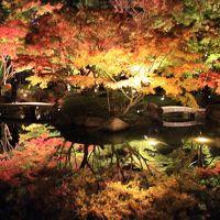 荻窪散策:大田黒公園の紅葉(ライトアップも)ほか2019年11月
