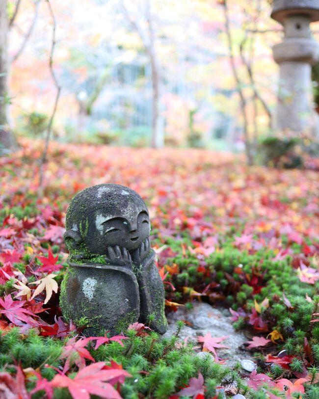 午後は更に紅葉を求めて詩仙堂~圓光寺へ。