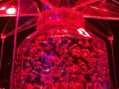 日本橋アートアクアリウムに行ってみた☆~アートアクアリウム・最強のコーラ・900万の絵~
