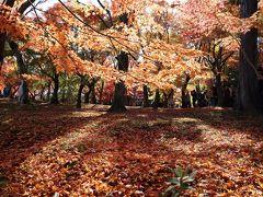 京都・さんぽ地図の旅 ⑨光明院~秋色の東福寺