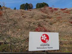四季桜と紅葉のコラボ