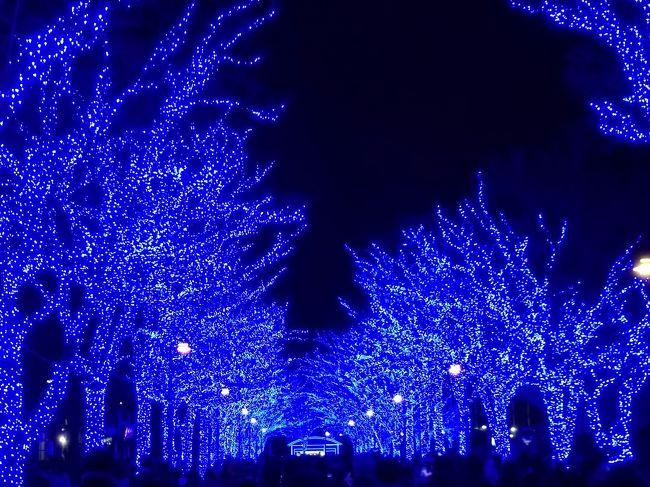 初めて青の洞窟.<br />渋谷公園通りから代々木公園までの800m。<br />通りを歩いていると、だんだん青の電飾が多くなってくる。<br />代々木公園まで行くと、一面、青、青、青…。<br />幻想的な世界が広がっていた。