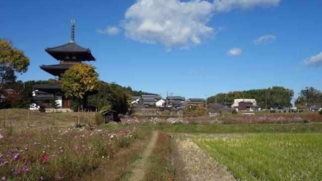 晩秋の斑鳩路から富雄川そして秋篠川と大和を北に向けて輪行してきました。ここ暫くは、北から南へ下るルート(どちらにしても往復しているので同じですが)が多いので、何か景色が新鮮に見えます。法輪寺前へ車を置く前に土産を購入、和歌山産のミカンです。何故、大和で紀州のミカンとあまり深くお考えにならず、紀の川繋がり程度としましょう。<br />