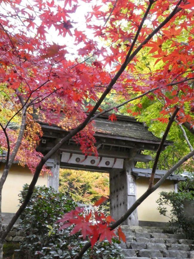 """11/20:日帰り旅行<br />妹が私に合わせて有給を取ってくれたので、私の大好きな京都へ紅葉を見に行くことにしました。今回は京都の中でも""""見頃""""となっていた初めての大原へ訪れることを前日夜に急遽決定!<br />京都駅で、お得な1日パス900円を見つけて購入して行ってきました。<br />(京都駅 &gt; 地下鉄に乗り換えて国際会館前へ > バスで終点大原まで)<br />バスは、紅葉シーズンということで増便していた為、ほとんど待つことなく、満員のバスに乗れました。<br />"""