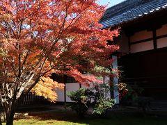 11月末 青蓮院門跡の紅葉
