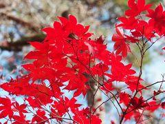 2019京都紅葉旅行(1)永観堂、南禅寺、哲学の道など