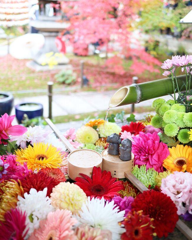 2日目はSNSで見かけて行ってみたかった勝林寺~東福寺へ。<br />今回の旅のキーワードは京都と紅葉と「インスタ映え」(笑)