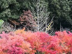 ☆2019年11月 紅葉の奥武蔵 秩父長瀞 冬桜の神泉☆ 休暇村奥武蔵 N01