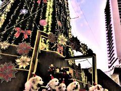 クリスマスムードの大阪梅田を歩きます!