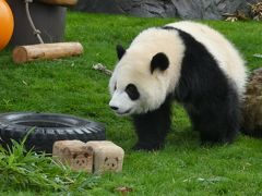 目的は御朱印、でもパンダ。アドベンチャーワールドに行ってきました。