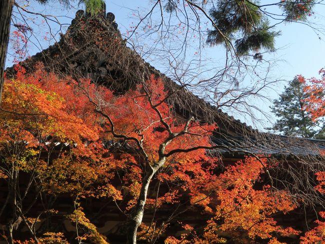 (写真は神護寺)<br /><br /> 今年も遅ればせながらやって来ました晩秋の京都。今回は3泊4日と急ぎ旅です。洛北を中心に紅葉を追っかけます。<br /><br /> ・烏丸を四条の風が吹き抜ける<br /><br /> ・神護寺の紅葉を敷いて大師堂<br /><br /> ・京モミジ貴船の床も紅く染め