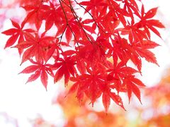 皇居 大嘗宮一般参観と秋彩の北の丸公園