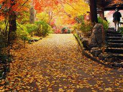 秋の紅葉散策